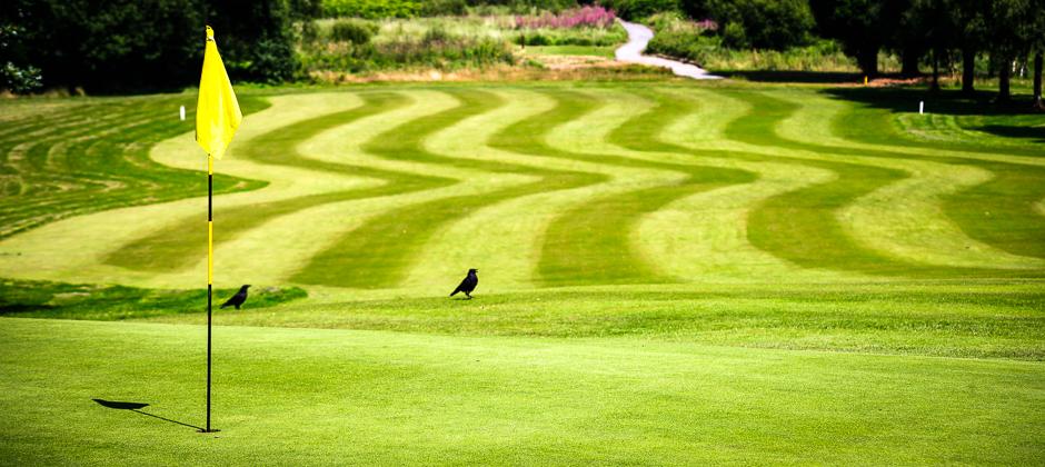 Morriston Golf Club Field
